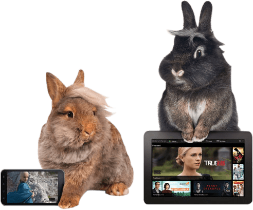 Entertainment for every bunny.