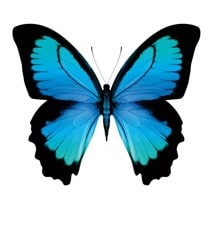 Mobility - Prepaid - Blue butterfly