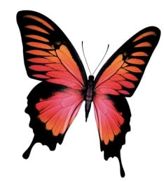 Mobility - Prepaid - Step 3 Activate your Prepaid account - Block Promo - Butterfly orange flying