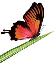 Mobility - Prepaid - Orange butterfly on grass